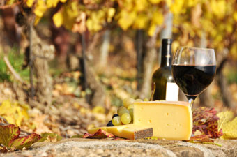 wine and cheese in a vineyard